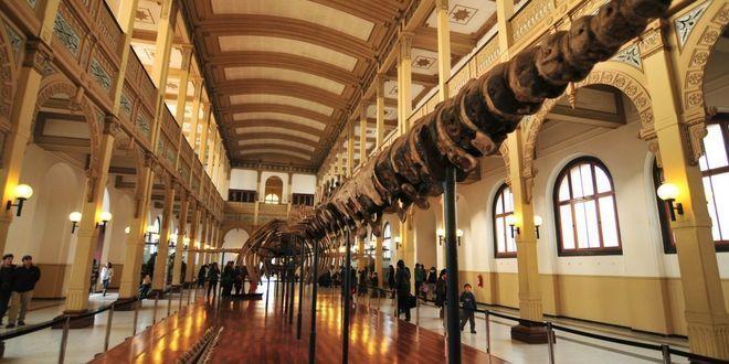 panoramas en santiago Museo Nacional de Historia Natural
